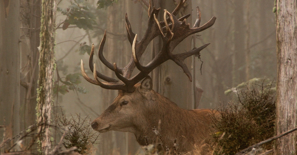 Hunting in New Zealand: Seasons, Species, FAQs & More | Poronui